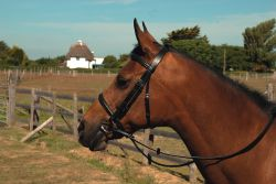 Heritage English Cavesson Leather Bridle