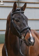 John Whitaker Flash Bridle