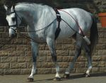 JOHN WHITAKER COMPLETE TRAINING SYSTEM WITH ROLLER